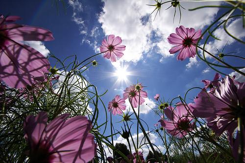 Beware Of The Flowers
