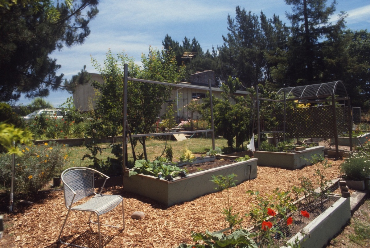 Vegetable raised beds, there's another 5 also.