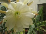 Another atrium flower, it's a  rainforest plant that grows in the canopy of the trees.