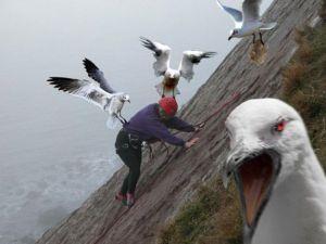 angry-seagulls1