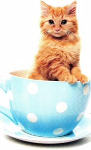 kitten in teacup
