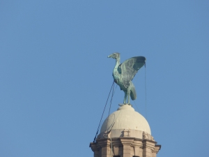 A Liver bird looking disapproving