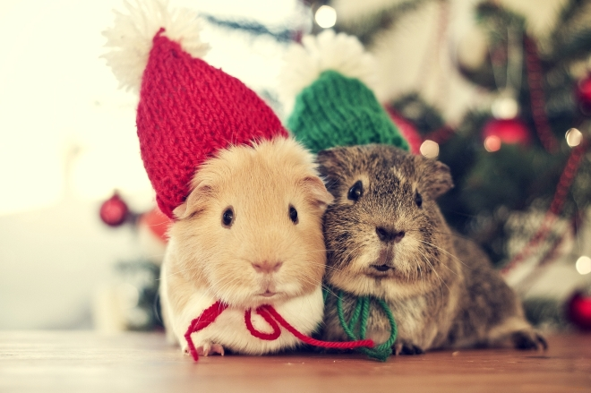 sweet-christmas-animals-cute-winter-cold-cozy-couple-holiday-mouse